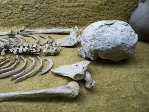 Forensic Anthropology 1